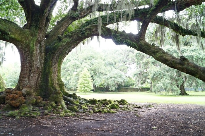 The Tree Of Life, New Orleans