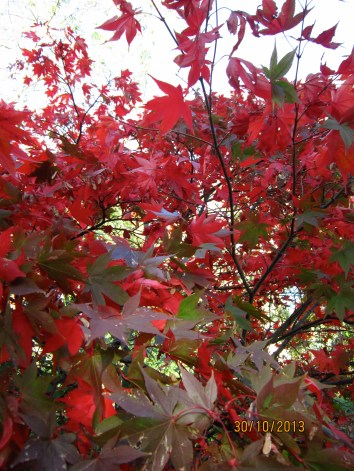 The beautiful rich colours of autumn