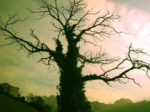 Arbol mágico del bosque