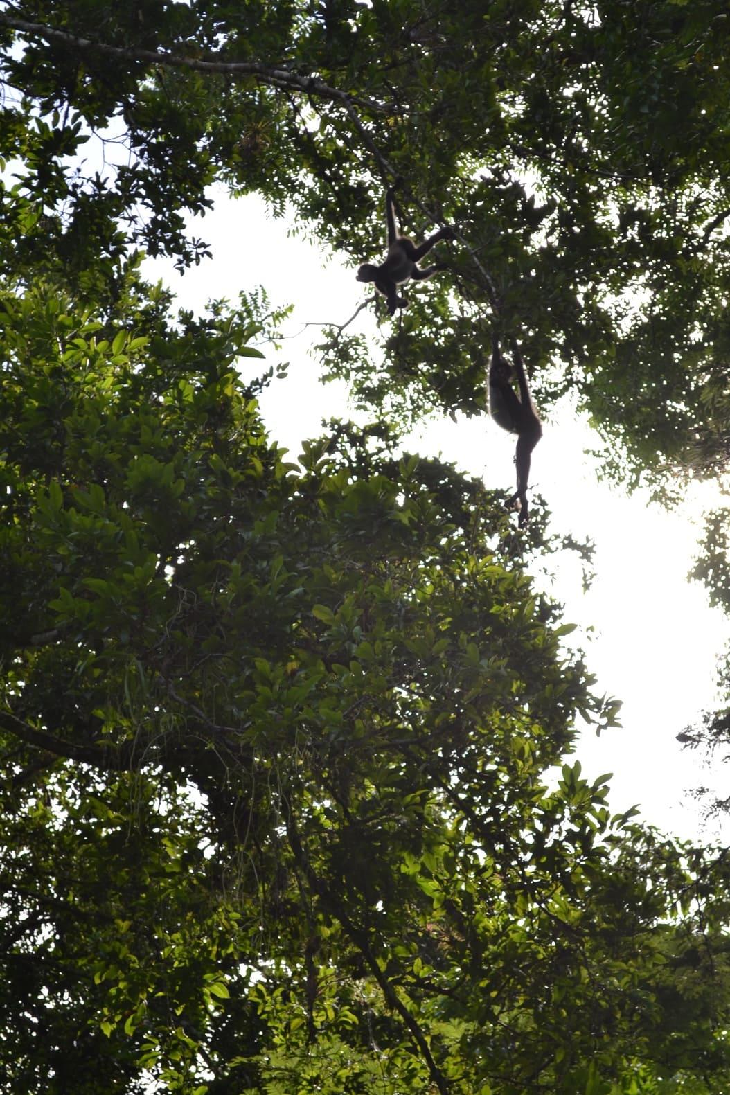 Tikal - guatemala 14