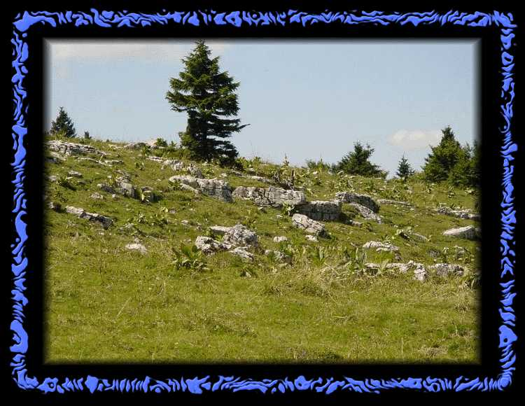 Juicy Jura meadows above the cliff