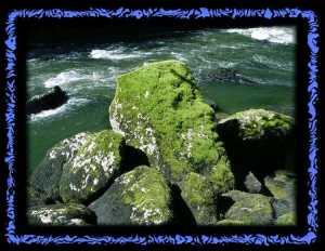 Moosbewachsene Steine am Doubs