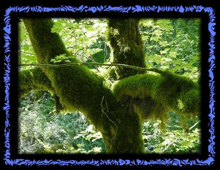 Moosbewuchs am Saut du Doubs