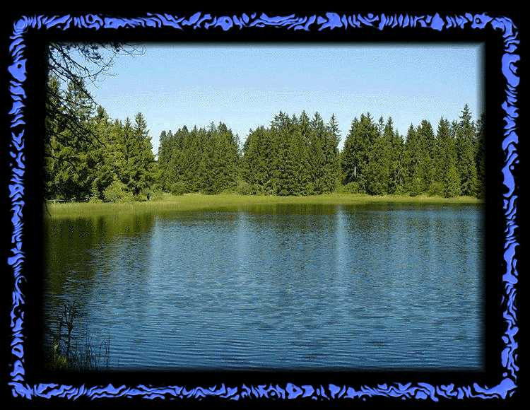 Etang de Gruere - View of the lake