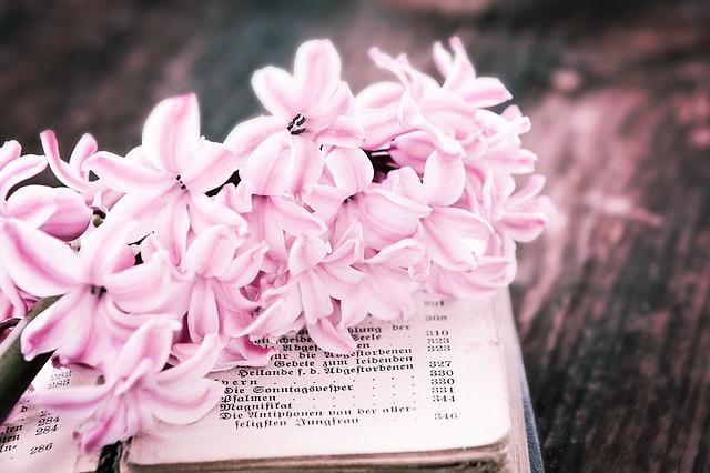 flower-769917_640