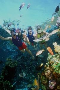 Shark Reef - wdw