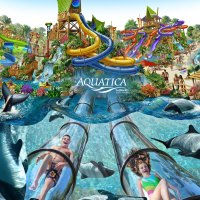 Time to Get Aquatic at Aquatica Orlando!