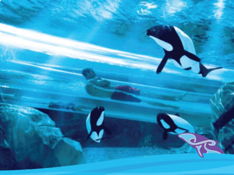 Dolphin Plunge - Photo by Aquatica, SeaWorld's Waterpark