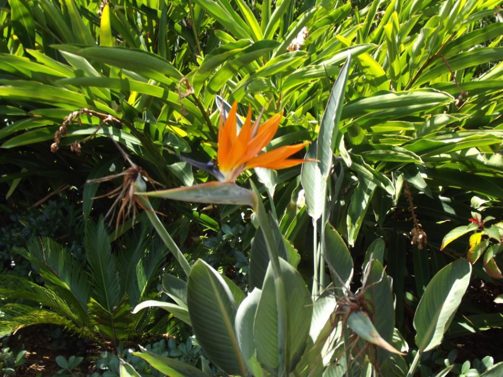 cbr flowers 2