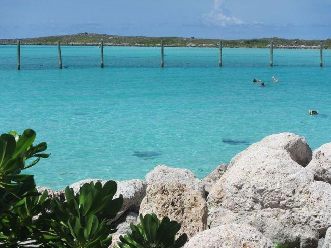 Stingray Lagoon on Castaway Cay
