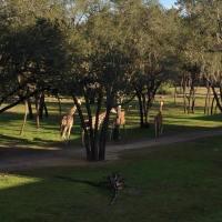 A Wild Adventure at Animal Kingdom Lodge