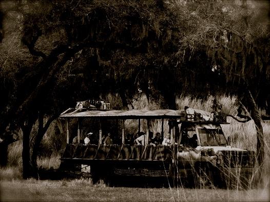 Nighttime Safari