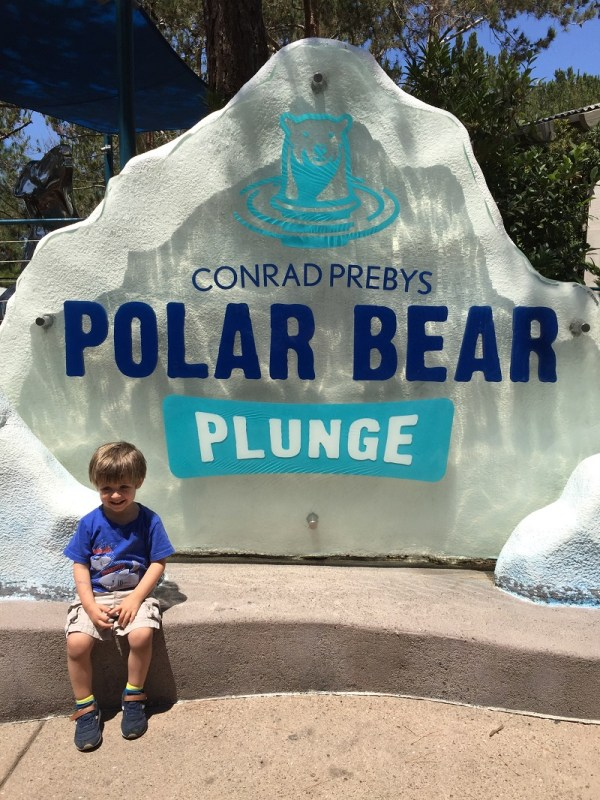 One of our favorites places in the San Diego Zoo is the Polar Bear Plunge exhibit.
