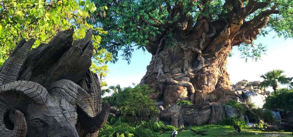 Photo of the Tree of Life at Animal Kingdom