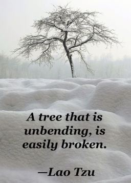 A Tree that is unbending Lao Tzu Quote