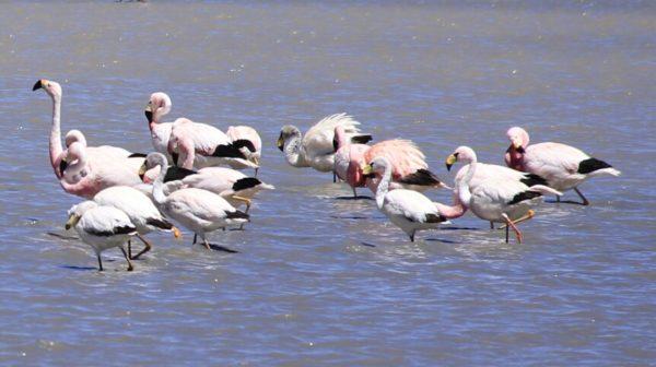 birdwashing en altiplano