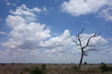 Safari Sky