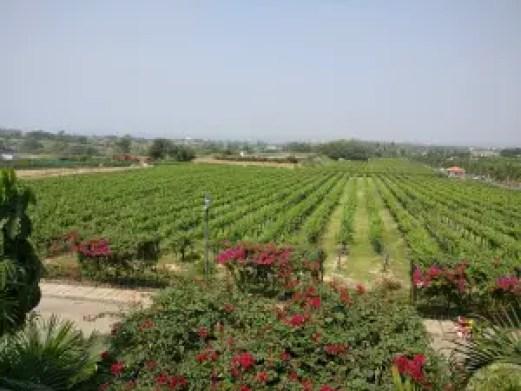 Sula vineyard - Best weekend getaways from Mumbai