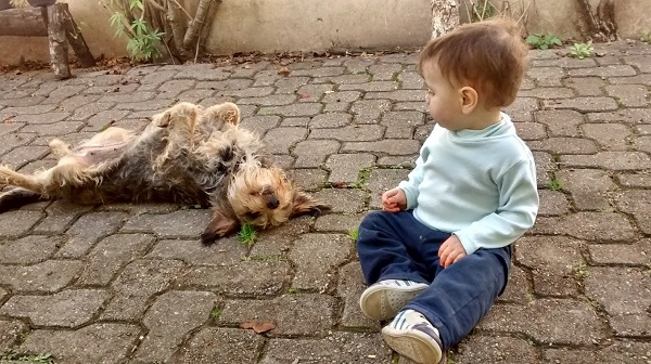 importância dos animais para as crianças