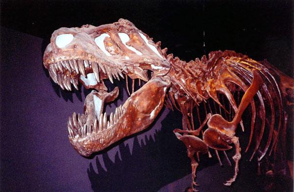 Tyrannosaurus Rex fossils in Drumheller Alberta