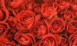медитация Очищение с помощью роз