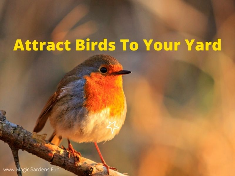 bird sitting on a branch How to attract birds to your yard