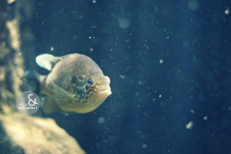 6613 sealife fisch saum&seligkeit