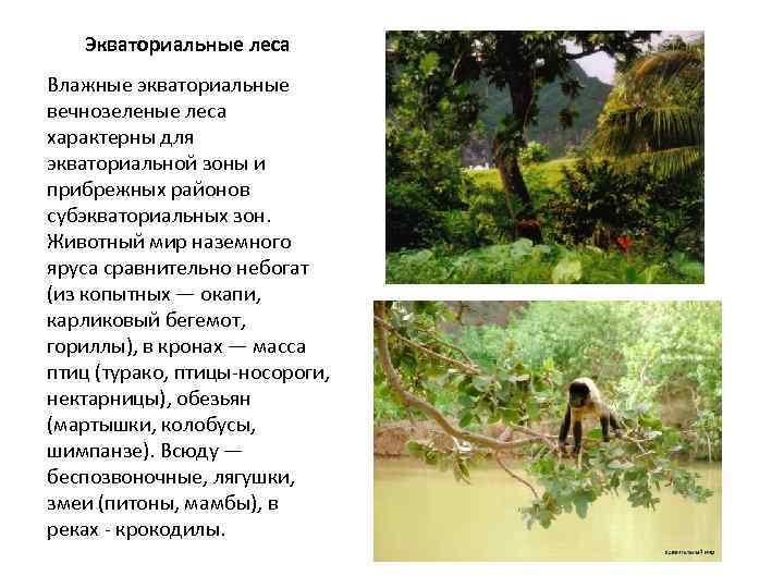 Zoznamka Ruskej legrační