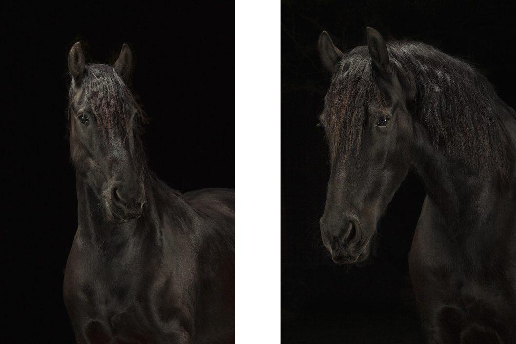 Hestefoto