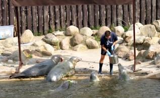 Hel - feeding seals