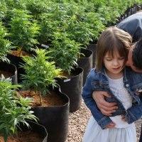 5 słynnych odmian marihuany bogatych w CBD