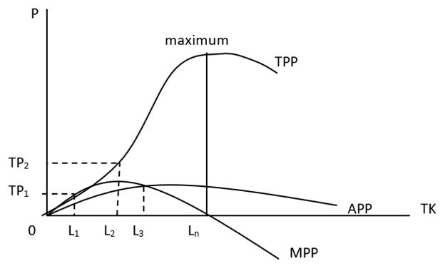 Kurva Hubungan TPP, APP, dan MPP pada fungsi produksi