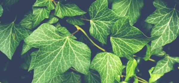 Teknologi yang Terinspirasi dari Struktur Jaringan Tumbuhan