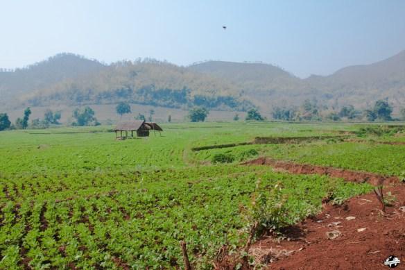 trek-hsipaw-birmanie