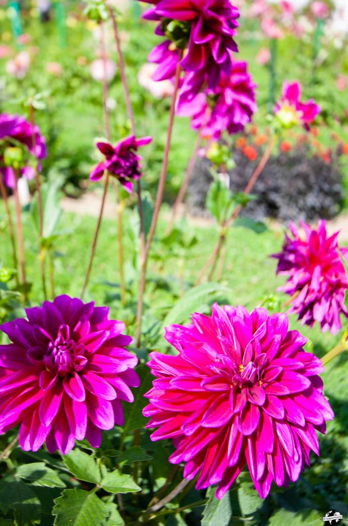 jardin cluj napoca