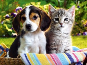 No photo available because it's fucking awful, that's why.  Enjoy this puppy and kitten instead.