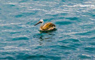Duck Skopelos TV