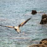 Pelican 4 Skopelos TV 4psd