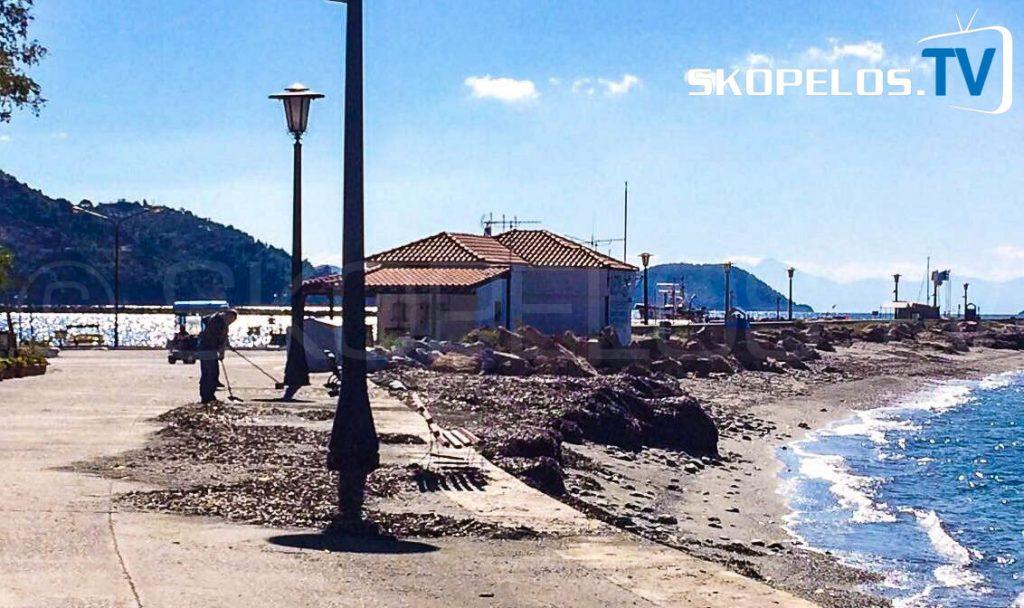 Seaweed Skopelos.TV