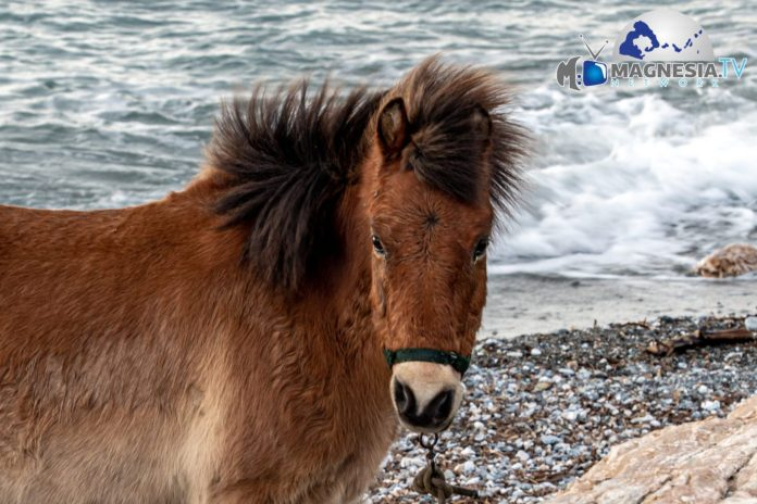 Pony 2 (2 Of 1)