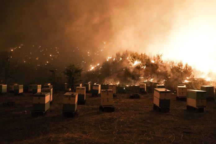 Φωτιά στην Εύβοια – Χάθηκαν χιλιάδες σμήνη μελισσών – Ολοκληρωτική καταστροφή