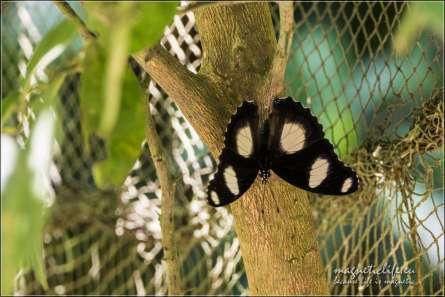 Zanzibar Butterfly Centre. Odpoczynek nakonarze
