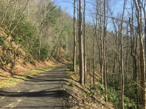 Virginia Creeper Trail Path