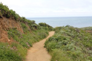 Gray Whale Trail at the ridge