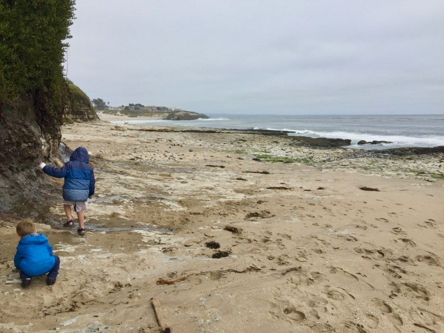 Natural Bridges State Beach Tide Pool Walk