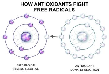 how antioxidants fight free radicals