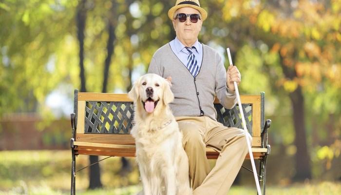 Los perros guías se convierten en los mejores amigos de sus dueños.