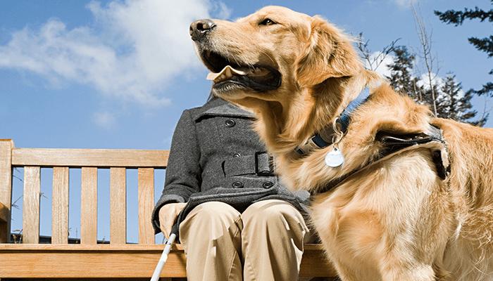 perros guías