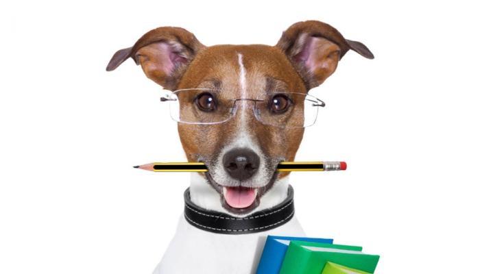 inteligencia en razas de perros