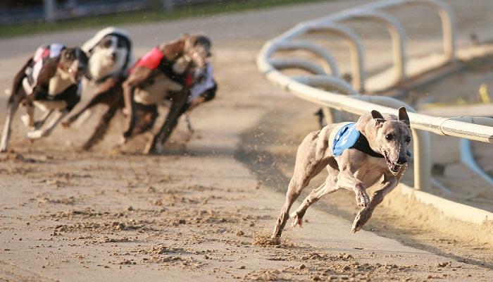 las razas de perros más veloces